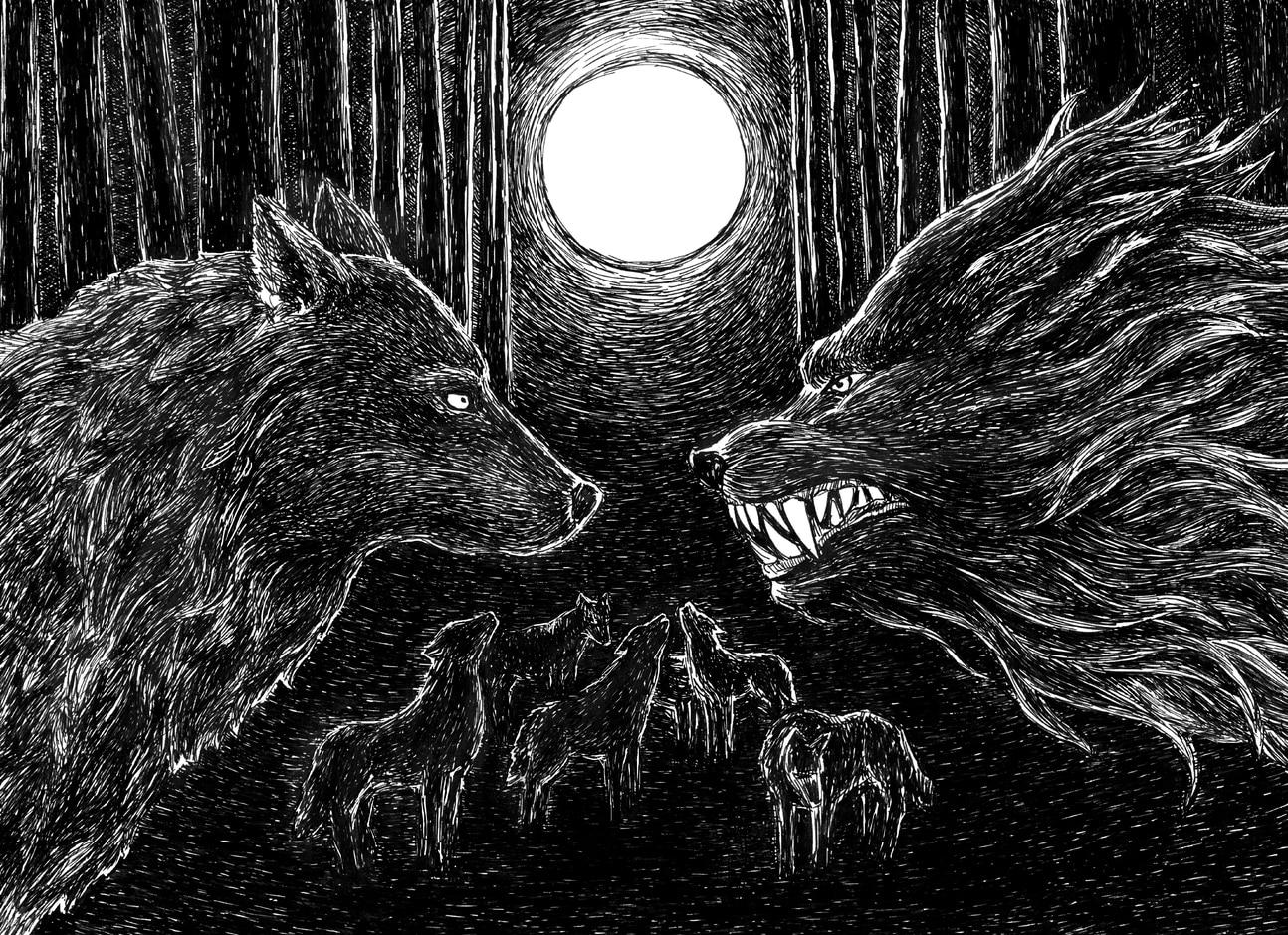 Zaszyj wilkom oczy - Marta Krajewska - Wilki