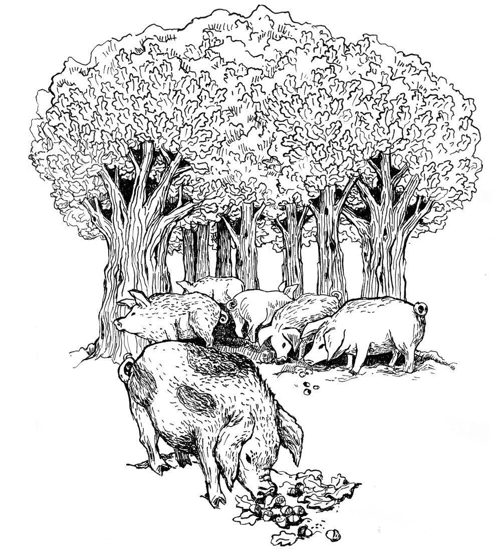 Świt midzy dobrym i złym - ilustracja 16
